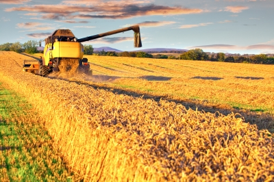 Crop fields being harvested