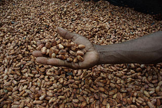 man holding cocoa beans