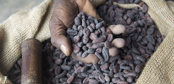 KitKat cocoa beans