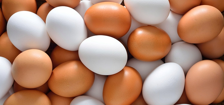 white and brown eggs