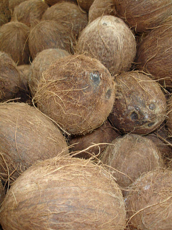 Kerala is planning to build a coconut processing facility in Kinalur, Kozhikode, with the capacity to handle 50,000 nuts and 200 litres of mature coconut water a day.