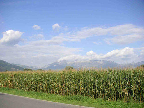 The plant is located in the heart of Hungary's maize growing regions.