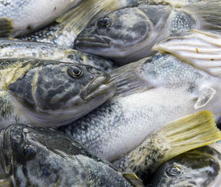 Fish is flown in from Iceland on a very tight turnaround so that the customer gets the freshest fish.