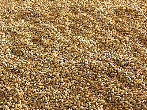 The malt plant is designed to produce about 313t of malt per day.