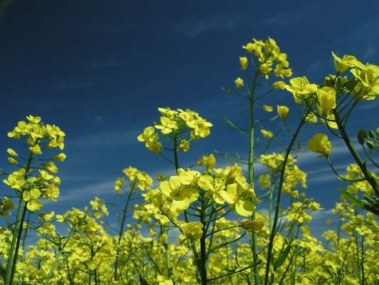 Cargill's new facility in Camrose, Alberta, has a capacity to process one million metric tonnes of canola a year.