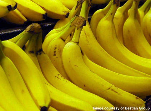 Bananas will form a large part of the dried fruit production at the new processing plant.