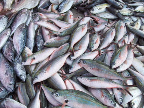 Fish processing contributes about £135m annually to the local economy.