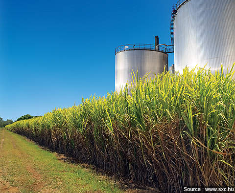 The WSNP project has set aside about 150,000 acres of land for sugarcane cultivation.