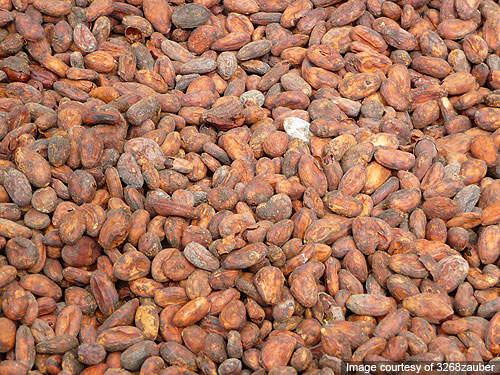 A new primary processing facility in San Pedro provides the plant with clean cocoa beans.