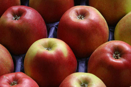New experimental variety of apple (Virginia Red) being experimented with as containing more juice than Granny Smiths and Golden Delicious.