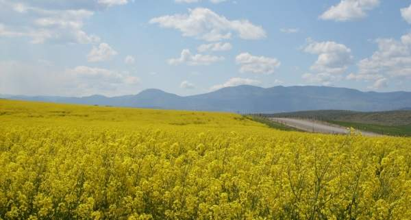 The plant created demand for $200m worth of canola seeds. J Austin & Associates, the PR consultant of Legumex Walker.