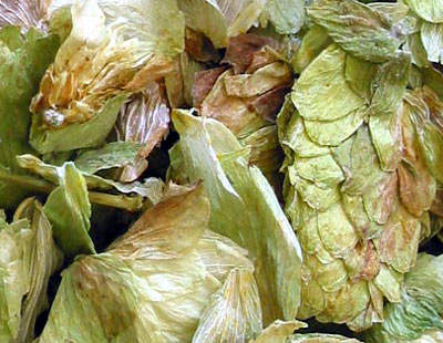 The brewer uses hops from Kent and the Midlands in the UK, as well as from Slovenia for the lagers.