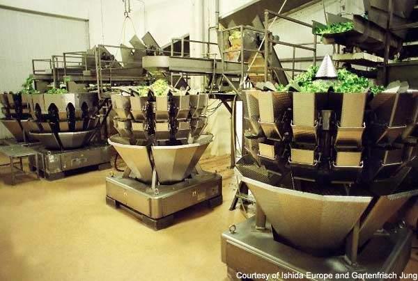 The Gartenfrisch salad packing line uses weighers from Ishida Europe.