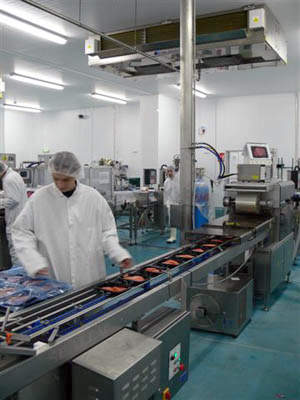 Salmon fillets being transferred for weighing and packaging.