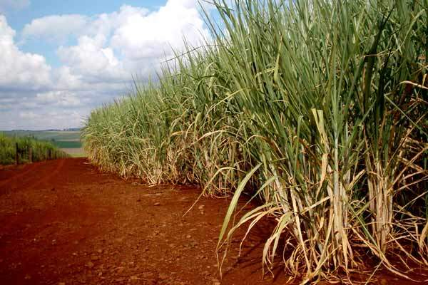 The sugar is refined from raw sugar cane.