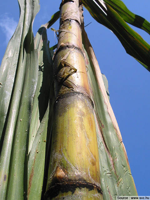 The plant has a sugarcane crushing capacity of 24,000t/day.