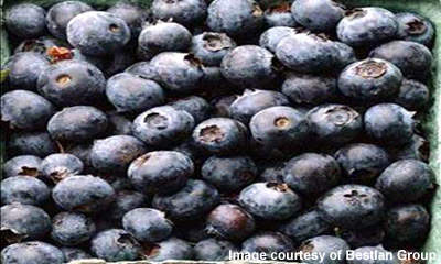 Blueberries are imported from Poland for drying to produce value-added products.