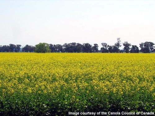 The new Canadian plant, which was opened in June 2010, can process 840,000tpa of canola .