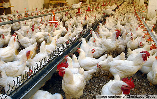 The investment is  part of Cherkizovo's plan to expand its poultry and pork production in the Lipetsk region.