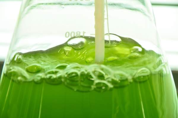 The AlgaeBio products will be used in the food additive and nutraceutical industries. Image courtesy of Algae Biosciences.