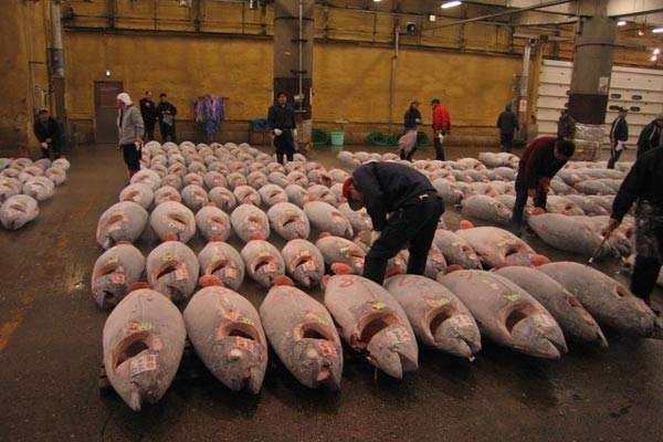 Tuna processing has now been re-established in the Nora factory.