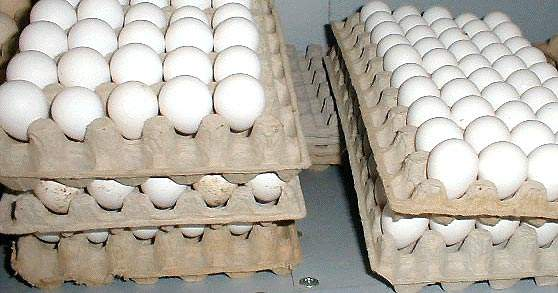 Eggs are delivered in bulk pallets and in protective trays; all are logged and fully traceable from delivery to the batch of product.