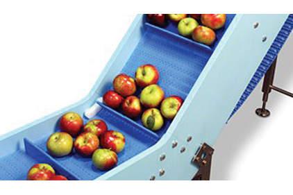 apples on a conveyor belt