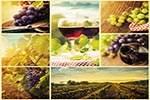 diagnostics test kits for wine