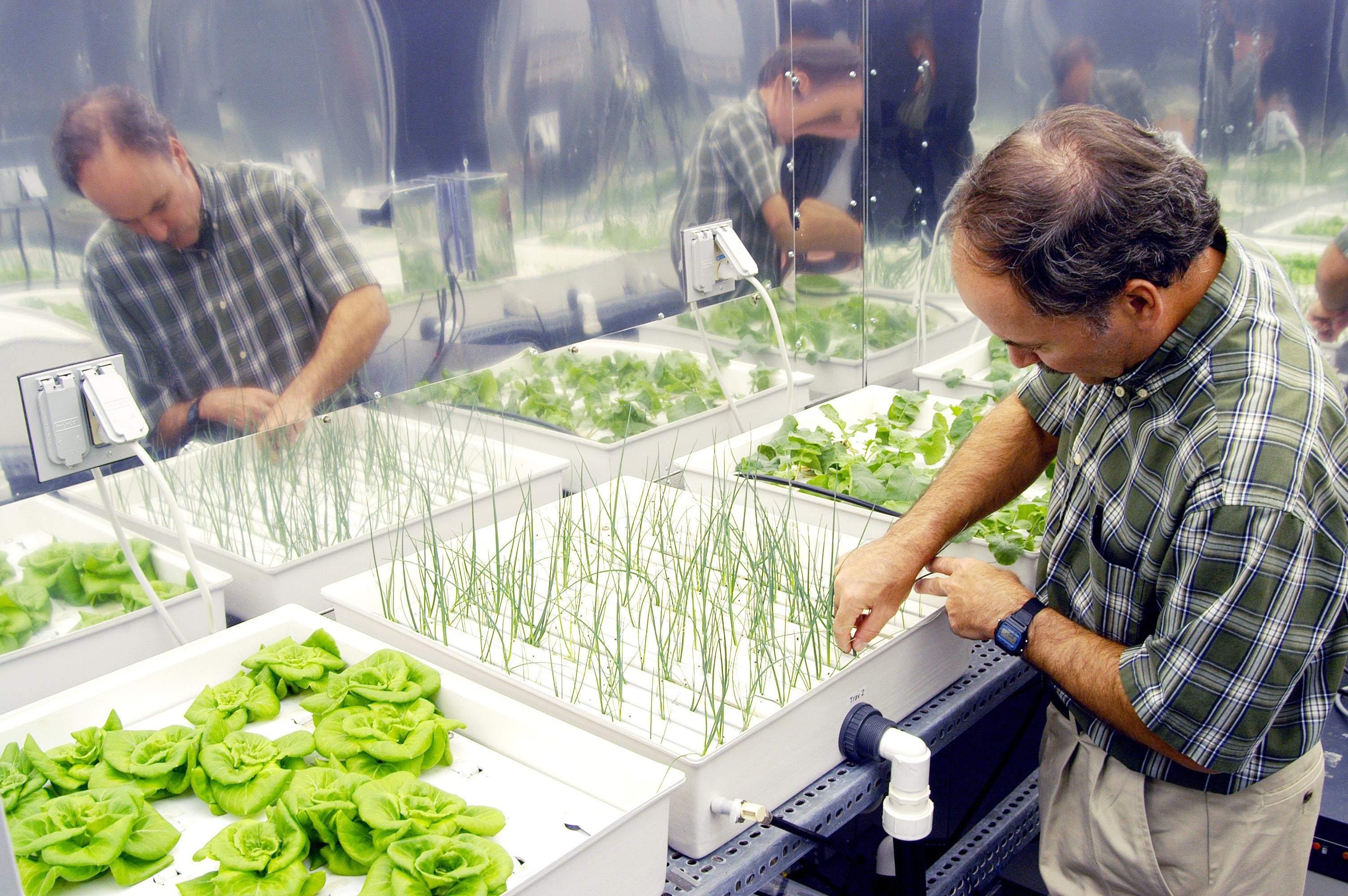 Hydroponic farming onions
