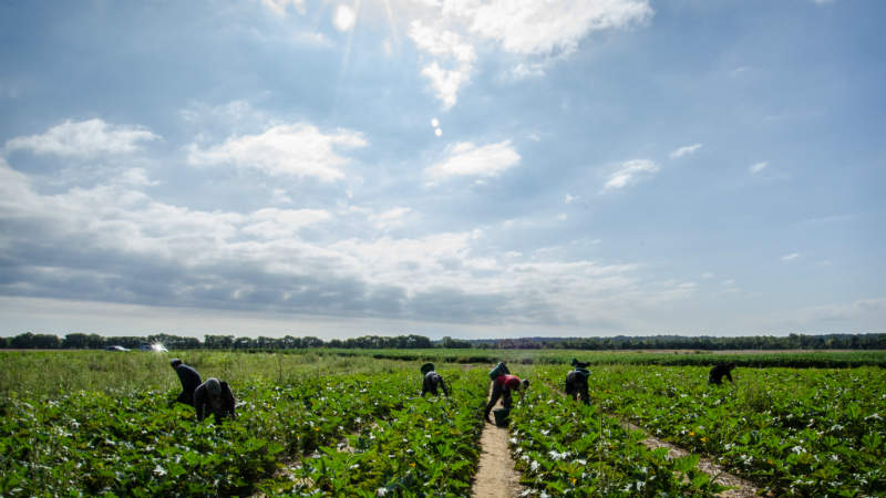 field labour. Source - US Department of Agriculture
