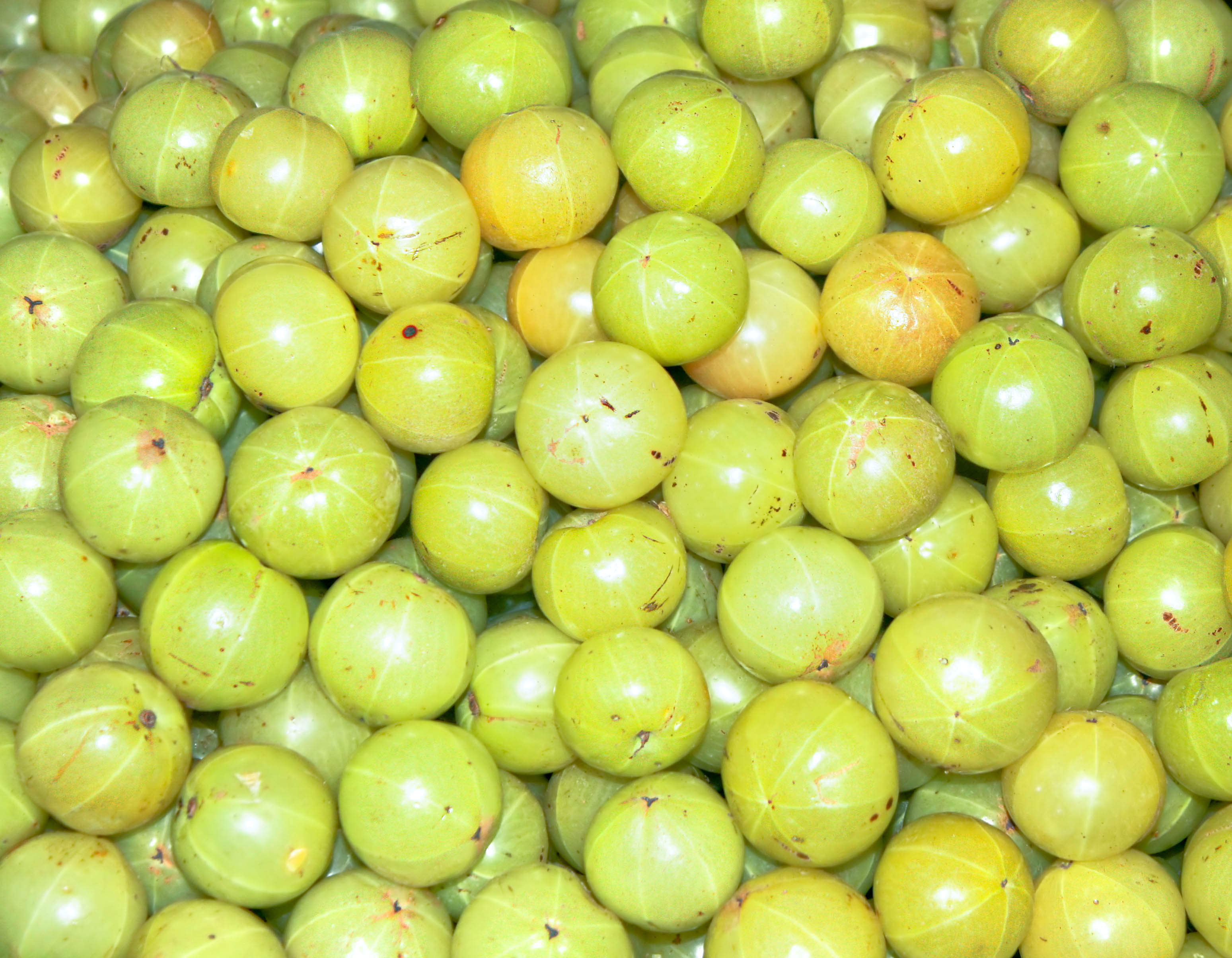 The amla extract: profiling the berry landscape