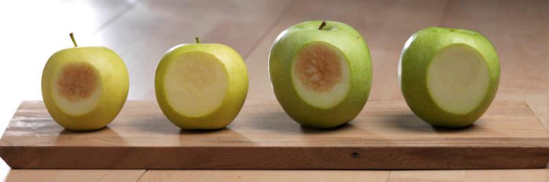 arctic apple bruise test