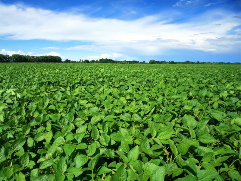 soy farms