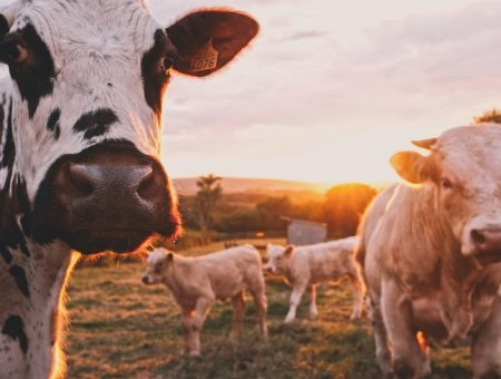 UK's Meadow Foods to build new facility for plant-based products