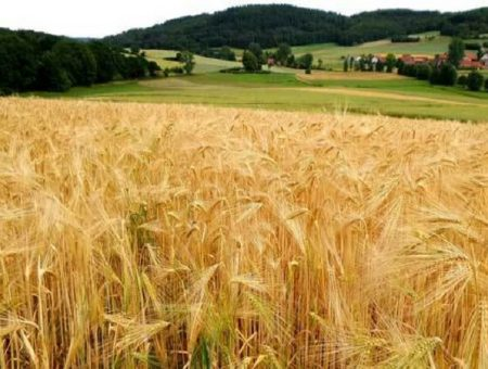 EBRD to support Ukraine's Grain Alliance operations