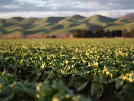 DSM and Avril launch JV to produce canola proteins for food market