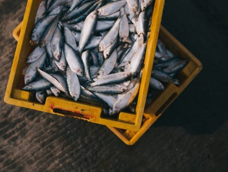 Sanford proposes Tauranga fish processing plant closure in New Zealand