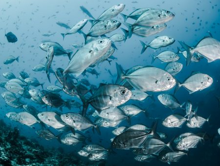 Quinsea Fisheries and Clearwater obtain approval for fish plant