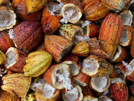 Mondelēz cocoa