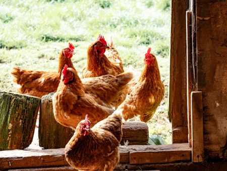 Chicken company Shenandoah Valley Organic to build new facility in Virginia