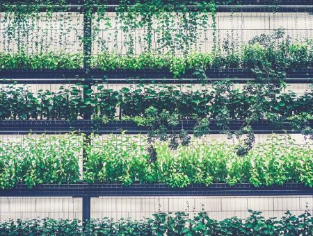 McCain Foods invests in TruLeaf Sustainable Agriculture