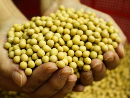 Cargill to invest $475m on soy processing operations in US