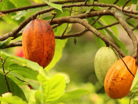 Cargill and Nestlé to co-support cocoa farming communities in Indonesia