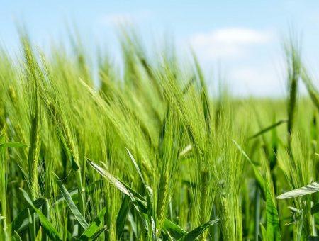 PepsiCo launches Positive Agriculture initiative