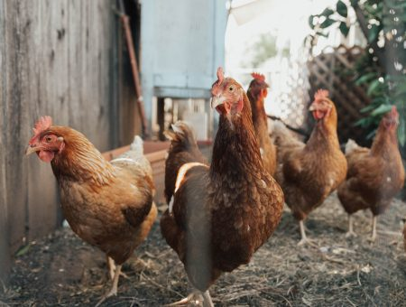 French poultry processor LDC gets conditional approval to acquire Ronsard