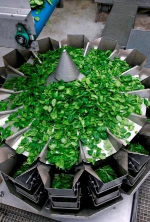 Ishida Salad Weigher