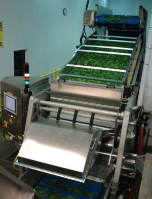 lettuce sorting