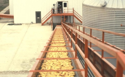 Corn conveyor