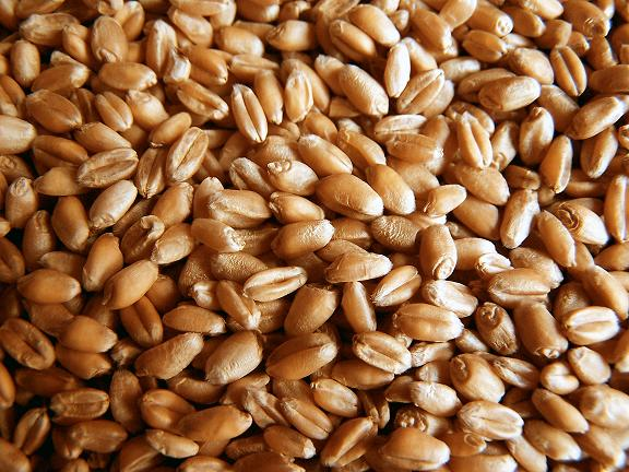 Wheat germ research papers